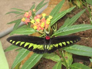 granja-mariposas