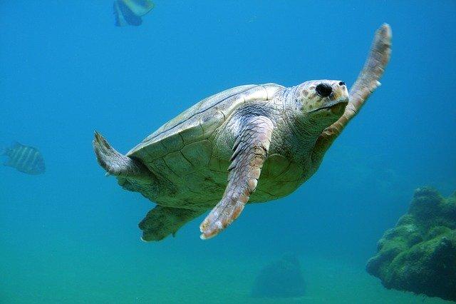 sipadan-buceo-tortugas
