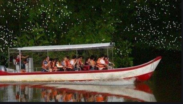 Paseo en bote Kota Tinggi Firefly Park Luciérnagas Malasia Johor