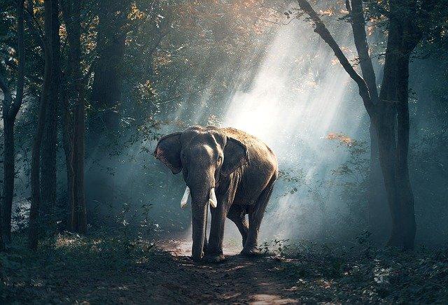 jungla-tailandia