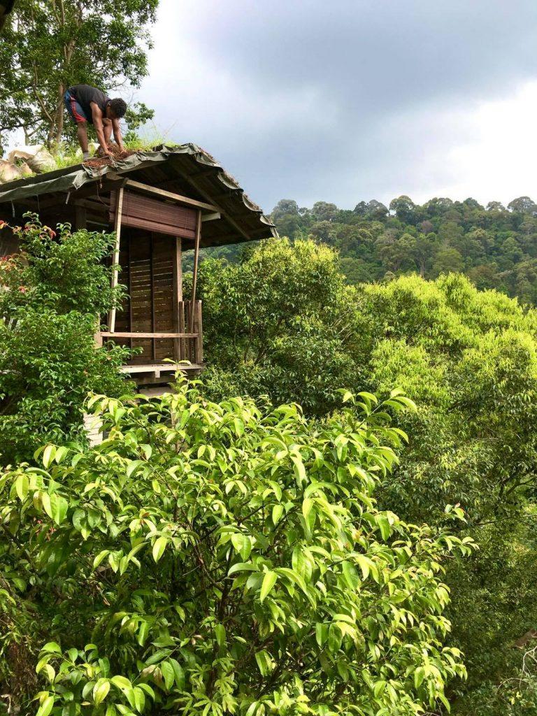 Rain Forest Tree House. Casa en el árbol en Malasia